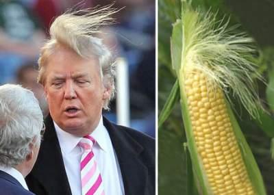 10 cosas increíblemente parecidas al pelo de Donald Trump  1489900f65aa