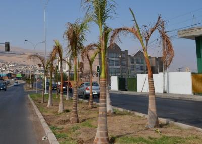 municipalidad iquique cl:
