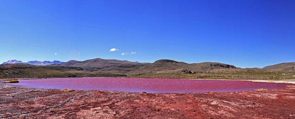 Laguna Roja de Camiña